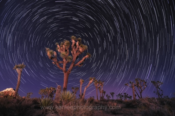 Star Trails, 28 April 2012, Joshua Tree National Park by Ken Lee