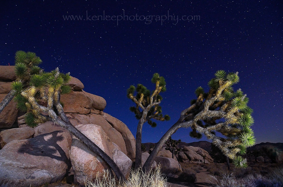 joshuatree0213_455threetrunk30sf4iso500-ALSOUSEASBLENDFORSTARTRAILS