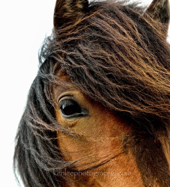 2016-06-18_1751_kenlee_14_iceland_northwest_horses-eye-with-half-face_1-320sf8iso800-800pxtall