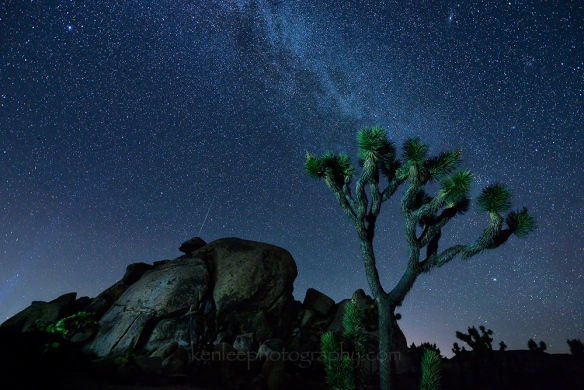 4547_kenlee_2016-09-04_0001_joshuatree_cap-rock_20sf28iso4000-shooting-star_1000px