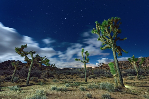 5293_kenlee_2017-02-11_2207_joshuatree-25sf8iso1250-magicland-1000px