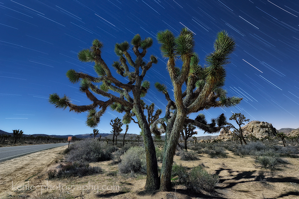 5477_kenlee_2017-02-13_0111_joshuatree30mtotal-3mf8iso800_startrailslargetree_byroad_star-trails_1000px