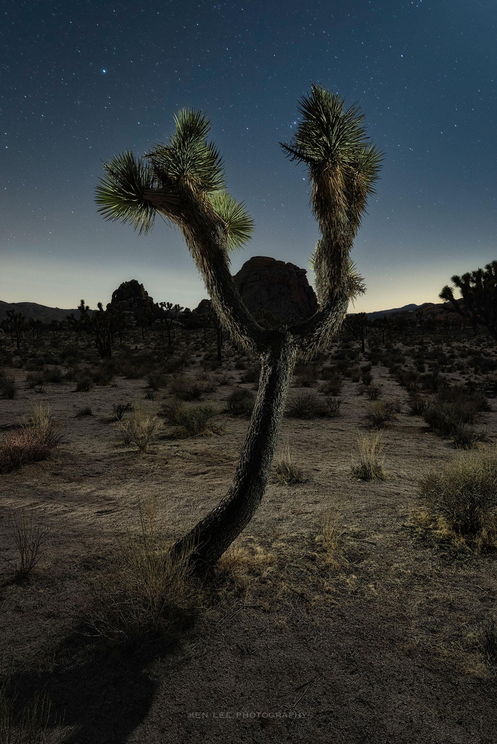 4013_kenlee_joshuatree_210320_2220_30sf71iso1600_wishbone-joshua-tree-sidelit-1600px-metadata photofocus